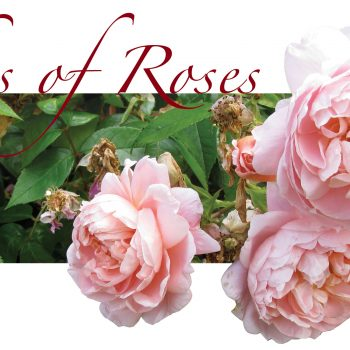 Ashes of Roses Consortium ~ A New Chamber Ensemble Version